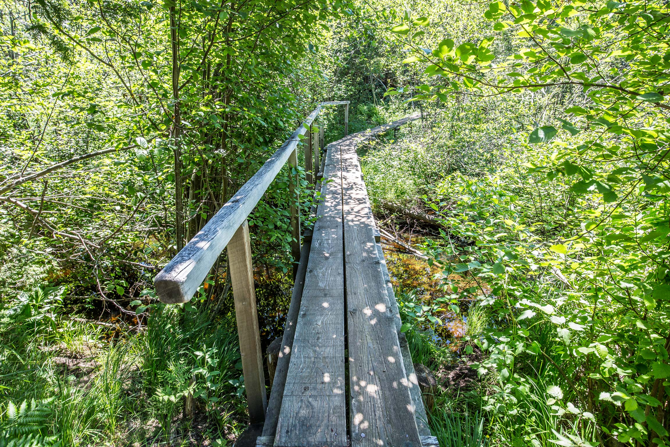 A Walkway in Isle Royale National Park
