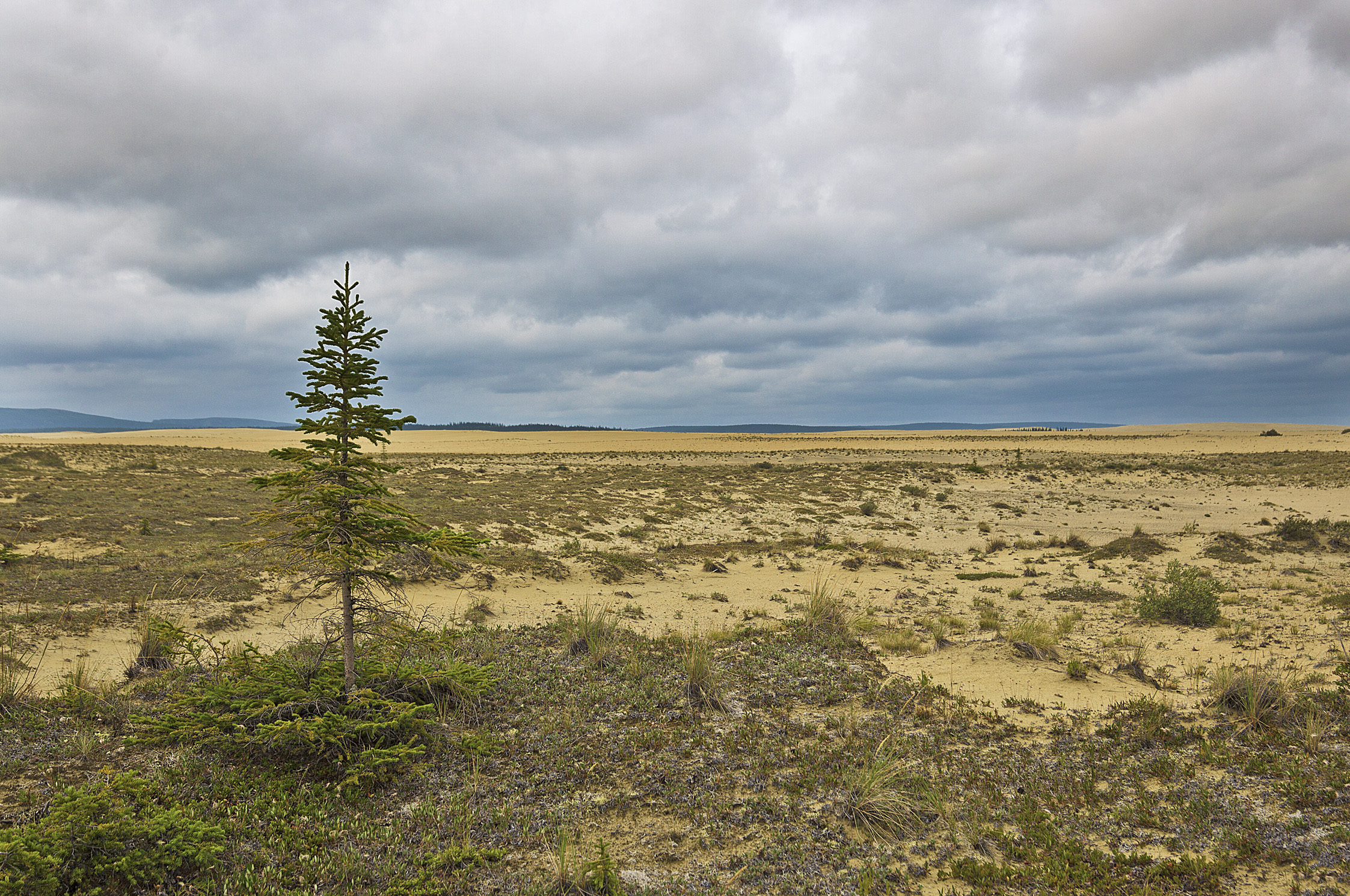 A rogue tree in Kobuk Valley